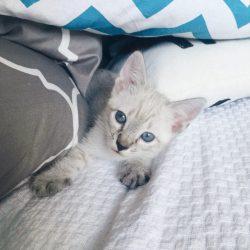 Dicas sobre Gatos | Pisco na Veterinária