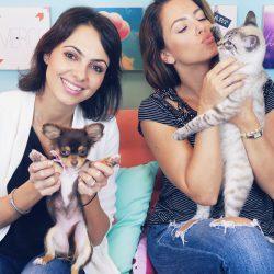Cuidar e Educar seu Gato   Dicas com Dra. Carol Haddad