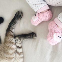 ADAPTAÇÃO E CUIDADOS | Gatos e Bebê